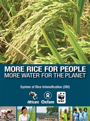 more-rice